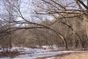 Park zimą