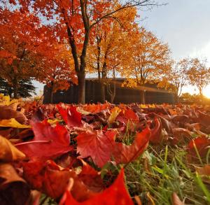 Jesień #TężniaBusko